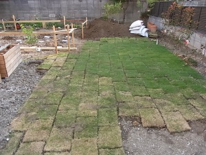 The lawn starting to take shape